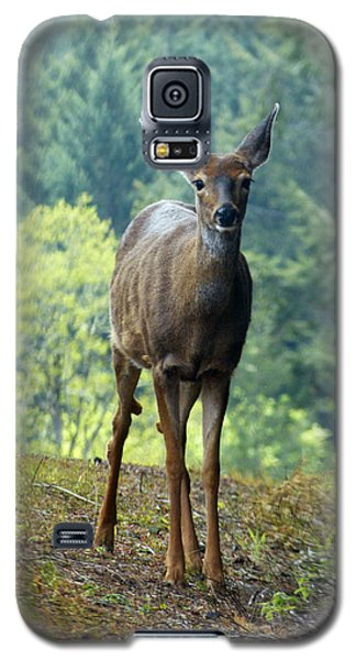 Deer Galaxy S5 Case