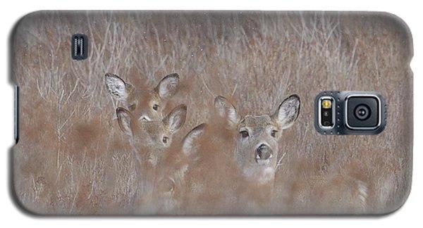 Deer Soft Galaxy S5 Case