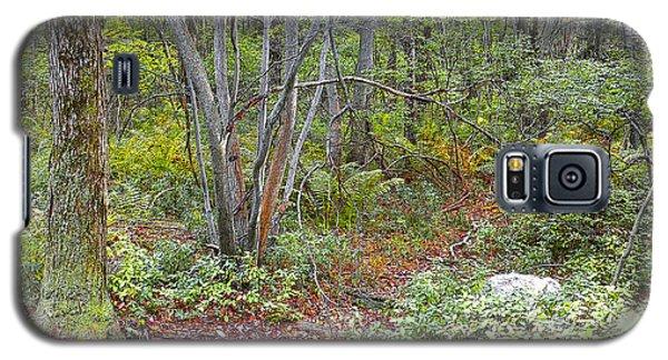 Deer Trail Early Autumn Pocono Mountains Pennsylvania Galaxy S5 Case