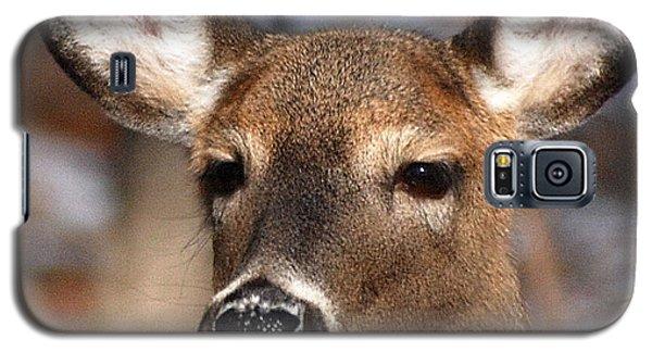 Deer Galaxy S5 Case