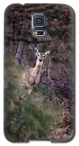 Galaxy S5 Case featuring the photograph Deer's Stomping Grounds. by Joshua Martin