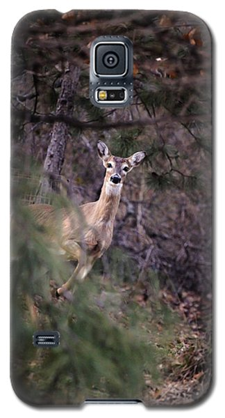 Deer's Stomping Grounds. Galaxy S5 Case