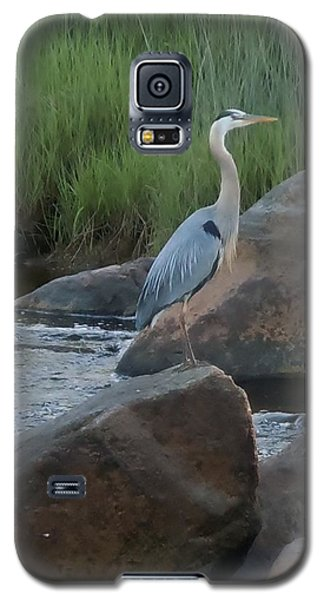 Galaxy S5 Case featuring the photograph Definitely Blue Heron by Francine Frank