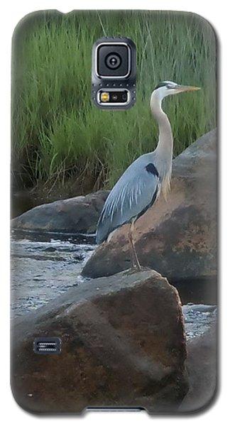 Definitely Blue Heron Galaxy S5 Case by Francine Frank