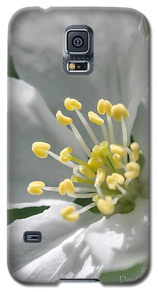Delcate Widflower With Beautiful Stamen Galaxy S5 Case