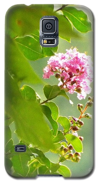 Delicate Blossom Galaxy S5 Case by Audrey Van Tassell