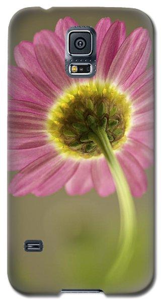 Delicate Daisy Galaxy S5 Case