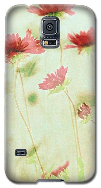 Delicate Dance Galaxy S5 Case by Patricia Strand
