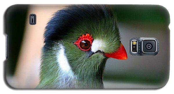 Delicate Green Turaco Bird With Red Beak White Patches And Black Crown Galaxy S5 Case