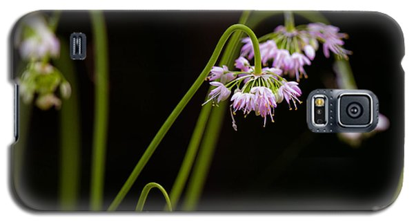 Galaxy S5 Case featuring the photograph Delicate Pink Drops by Haren Images- Kriss Haren