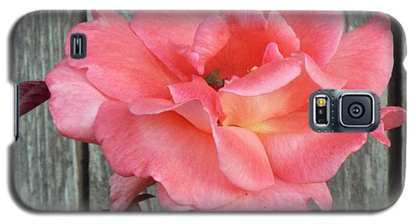 Delicate Pink Rose Galaxy S5 Case