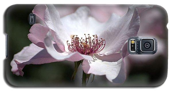 Delicate Pink Galaxy S5 Case by Sharon Elliott