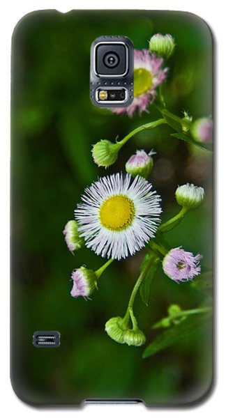 Galaxy S5 Case featuring the photograph Delicate Pla 528 by G L Sarti
