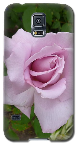 Galaxy S5 Case featuring the photograph Delicate Purple Rose by Lingfai Leung