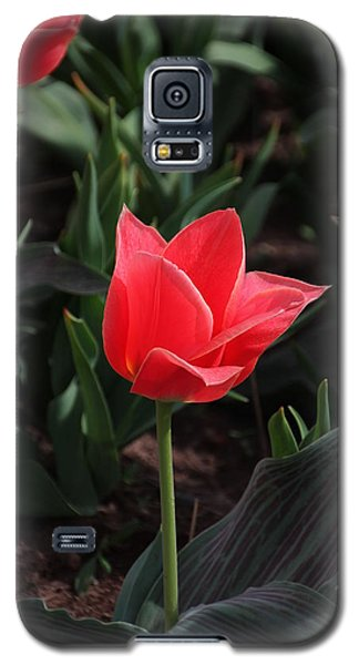 Delicate Red Tulip Galaxy S5 Case by Bill Woodstock