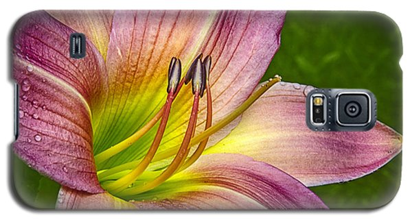 Delightful Daylily Galaxy S5 Case