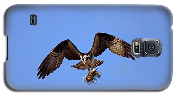 Osprey Galaxy S5 Case - Delivery By Air by Mike  Dawson