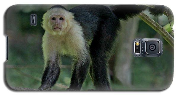 Denizen Of The Rainforest Galaxy S5 Case