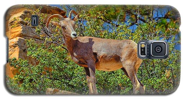 Desert Bighorn Sheep Galaxy S5 Case