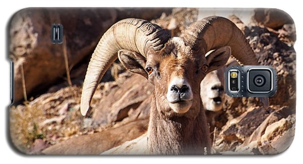 Desert Bighorn Sheep Galaxy S5 Case