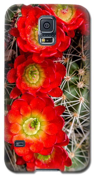 Desert Blooms Galaxy S5 Case