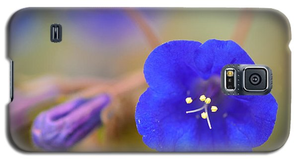 Desert Bluebells II Galaxy S5 Case by Tamara Becker