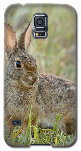 Galaxy S5 Case featuring the photograph Desert Cottontail by Doug Herr