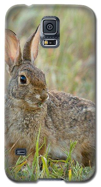 Desert Cottontail Galaxy S5 Case by Doug Herr