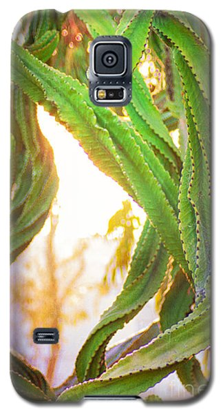 Desert Heat Galaxy S5 Case by Roselynne Broussard