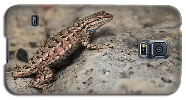 Desert Spiny Lizard Galaxy S5 Case