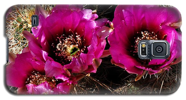Galaxy S5 Case featuring the photograph Desert Wildflower by Diane Lent