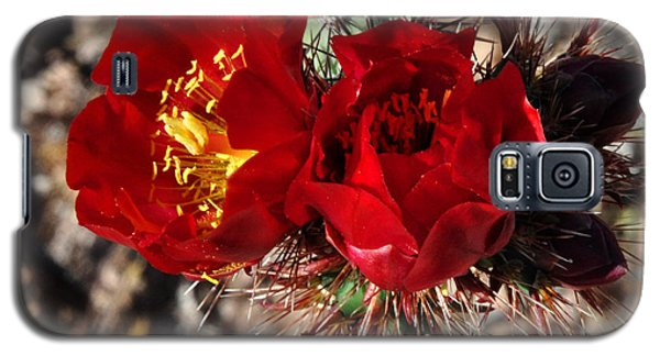 Galaxy S5 Case featuring the photograph Desert Wildflowers by Diane Lent