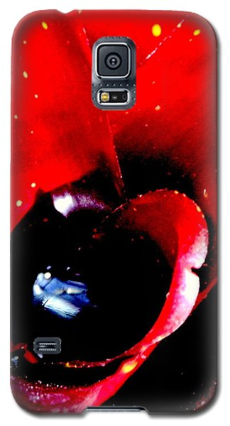 Galaxy S5 Case featuring the photograph Devilish Eye Of The Bromeliad by Antonia Citrino