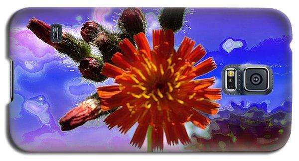 Devil's Paintbrush Galaxy S5 Case by Mike Breau