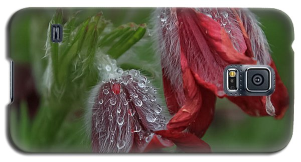 Dew Covered Pasque Flower Galaxy S5 Case by Jane Luxton