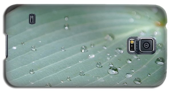 Dew Diamonds On Hosta Galaxy S5 Case
