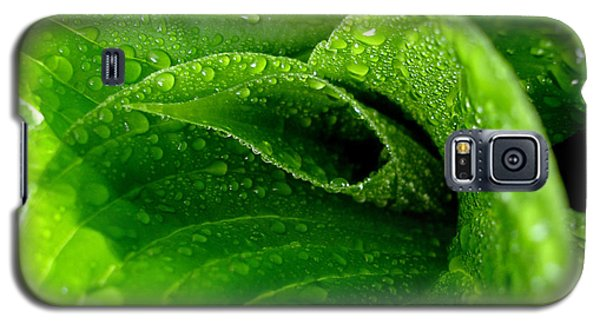Dew Drops Galaxy S5 Case by Lisa Phillips