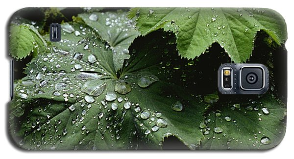 Galaxy S5 Case featuring the photograph Dew On Leaves 2 by Tom Brickhouse