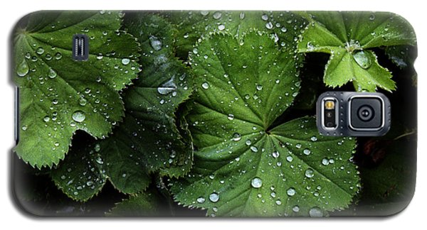 Galaxy S5 Case featuring the photograph Dew On Leaves by Tom Brickhouse