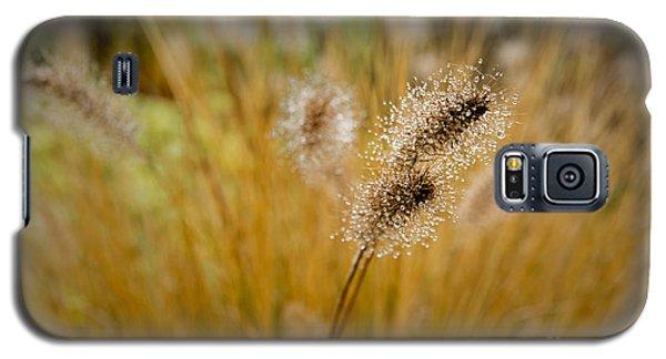 Dew On Ornamental Grass No. 4 Galaxy S5 Case by Belinda Greb