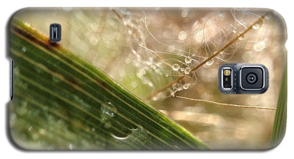 Galaxy S5 Case featuring the photograph Dewy Dandelions by Nikki McInnes