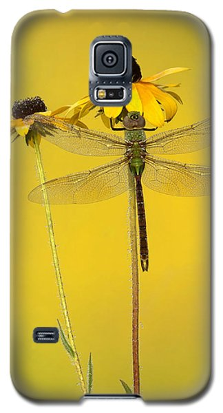 Dewy Darner Galaxy S5 Case