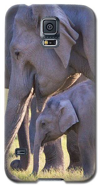 Dhikala Elephants Galaxy S5 Case