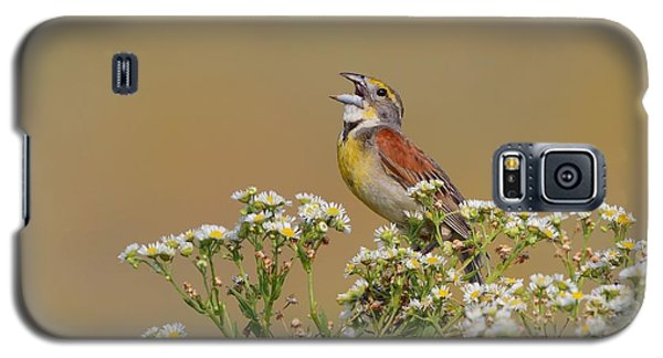 Galaxy S5 Case featuring the photograph Dickcissel On Wild Daisies by Daniel Behm