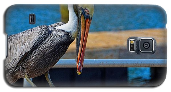 Galaxy S5 Case featuring the photograph Did I Drop Something by Pamela Blizzard