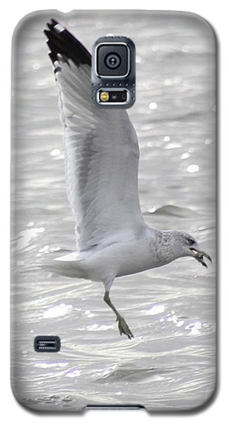 Galaxy S5 Case featuring the photograph Dining Seagull by Anita Oakley