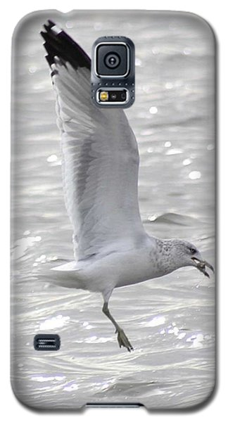 Dining Seagull Galaxy S5 Case