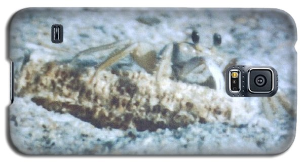 Beach Crab Snacking Galaxy S5 Case by Belinda Lee