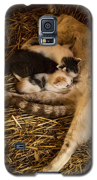 Galaxy S5 Case featuring the photograph Dinner Time by Jay Stockhaus