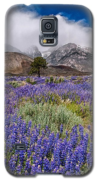 Division Creek Lupine Galaxy S5 Case